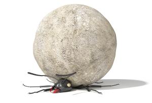 squashing ants