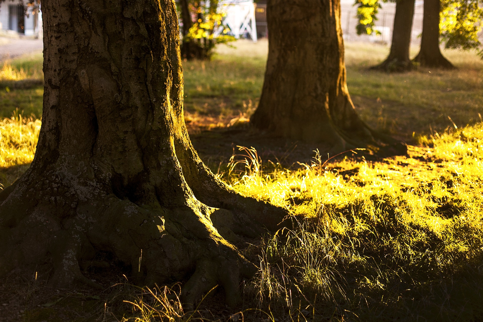 tree-1685603_1920